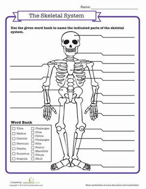 Worksheets Middle School Science Worksheets 1000 images about science on pinterest middle school life worksheets skeletal system quiz