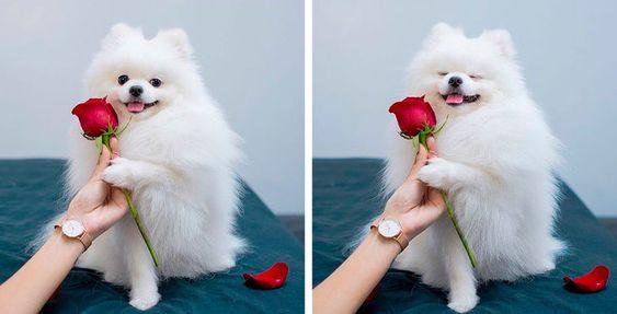 27 φωτογραφίες από απίστευτα ζωάκια που είναι αξιαγάπητα (Μέρος 2)