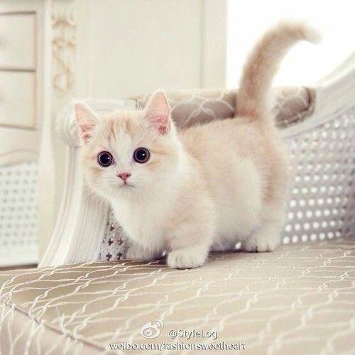 #toocute #kitten #camillelavie