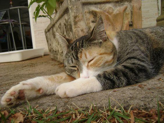 Sono + Preguiça + Gata