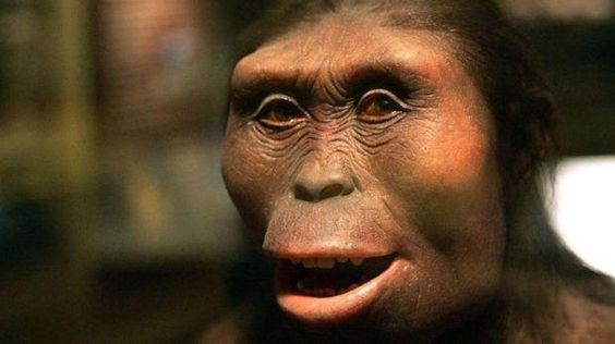 ¿Quien es Lucy, la Australopithecus? ~ Noticias Curiosas