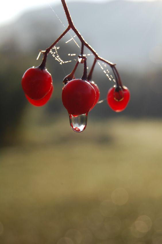 dew drop by aglai
