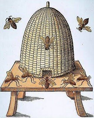 A beehive is a receptacle used as a home for bees. Most beehives are built by bees, but some are manmade. Honey bees weren't native to North America, and were brought over by the English colonists in the early 17th century.