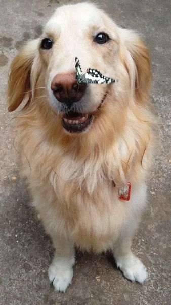 Sweet puppeh with butterfly fren. :D