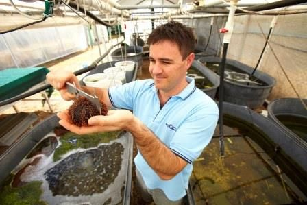 """JCU researcher studies climate change and its effects on rainforests - Lead researcher Brett Scheffers of the Centre for Climate Change and Tropical Biology at James Cook University in Townsville, Australia, said """"our findings suggest that the biodiversity that lives in the tree tops of rainforests may be pushed toward the cooler and wetter ground as the climate warms."""""""