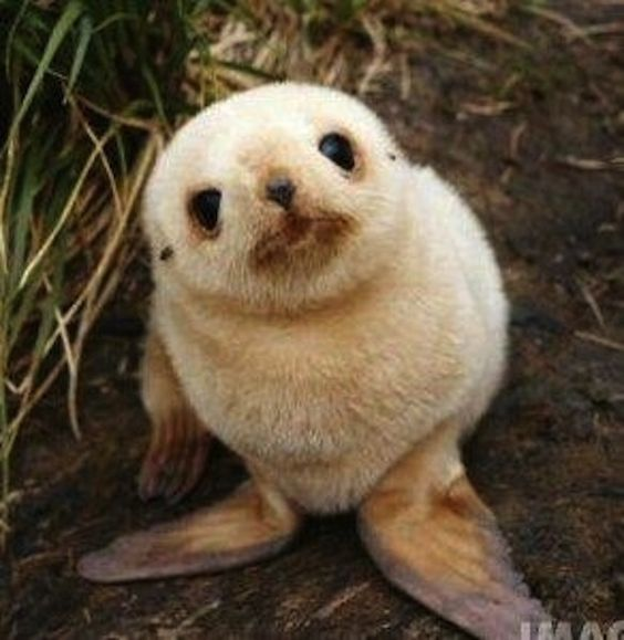 Cutest Seal Pups Ever