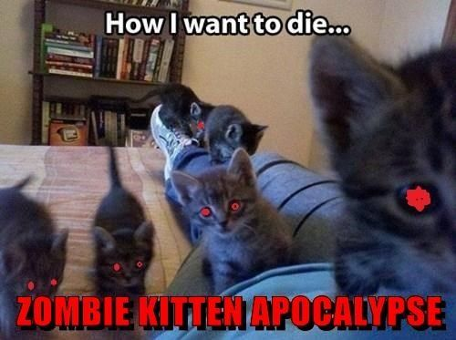 Kittens, Zombies and Apocalypse on Pinterest