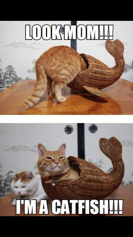 Catfish - funny cat.
