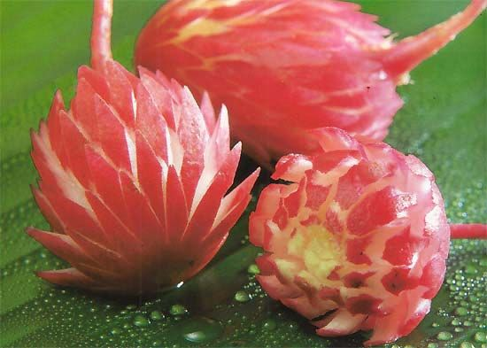radish flowers how to make