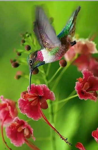 Explore - Google+   Hummingbird