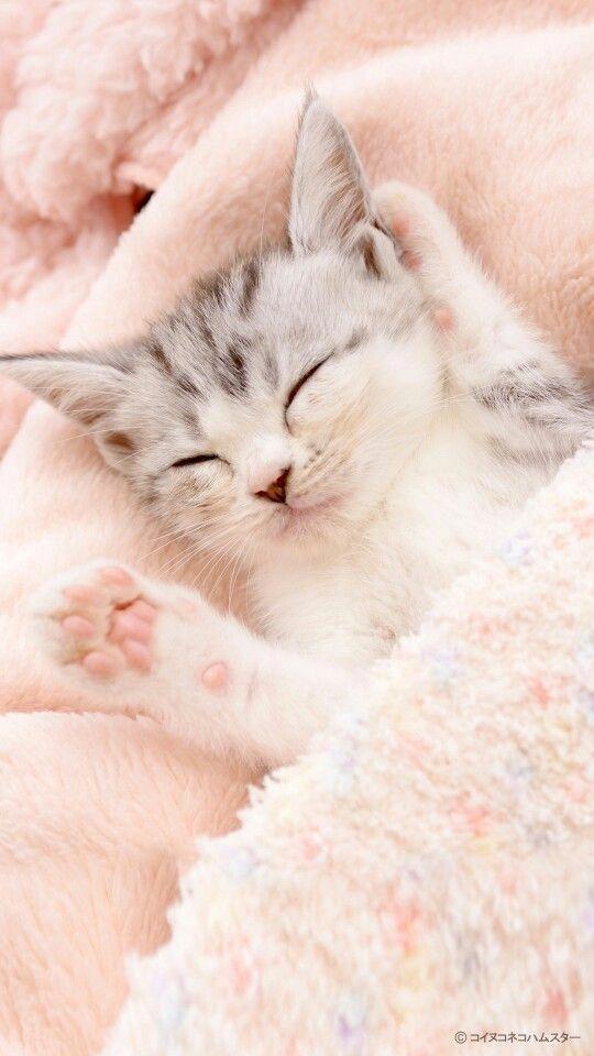 Pocket Kitten Cute Little Animals Kittens Cutest
