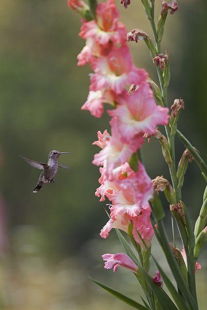 Hummingbird Os Animais Devem Ser Amados Como Se Amam Os