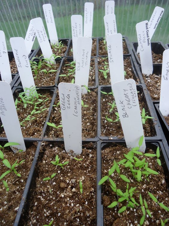 Its been another busy month in the greenhouse as I plan for my plant sale next month. Yes, next month! Eek! I better get moving. Above are all the tomato seedlings waiting for me to pot them up to …