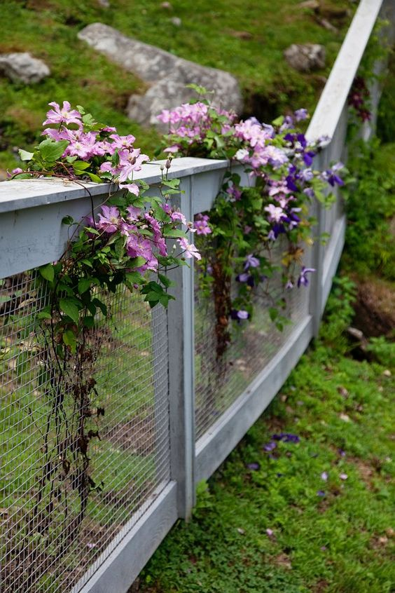 Fence Ideas Garden Fences And Fence On Pinterest