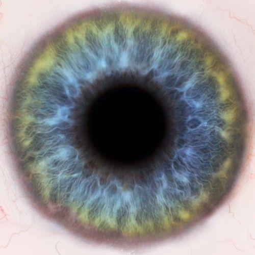 HD Close Up of Iris   ...
