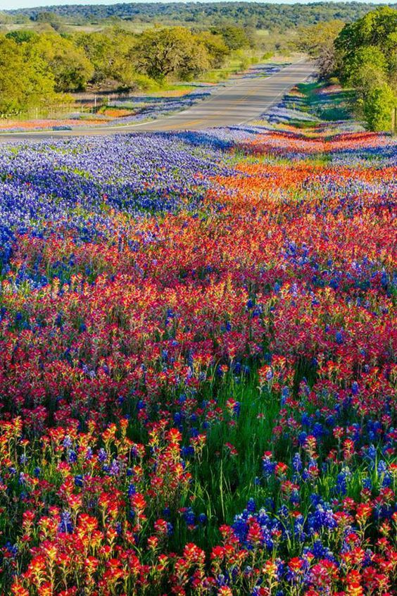 A carpet of Texas wildflowers in the spring, along Texas Highway 16 near Llano. Photo by Bill Stone.