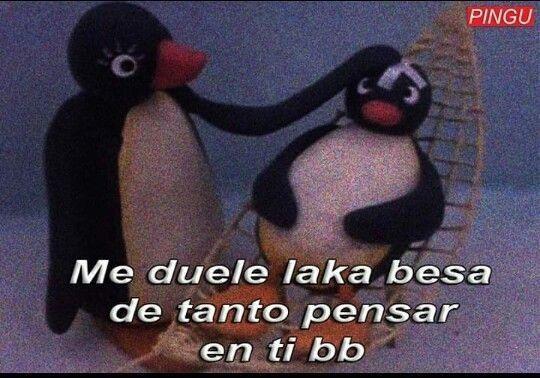 O1 Memes De Pingu Frases De Pinguinos Memes