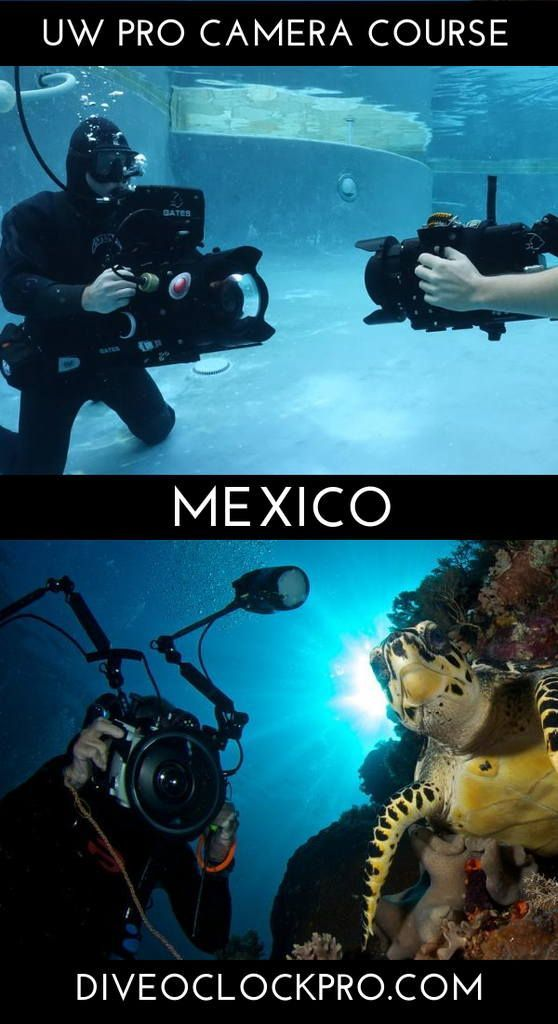 The Industry Pro Underwater Cameraman Course Certification Padi Cozumel Mexico Click For Details Www Diving Scuba Travel Scuba Diving Courses
