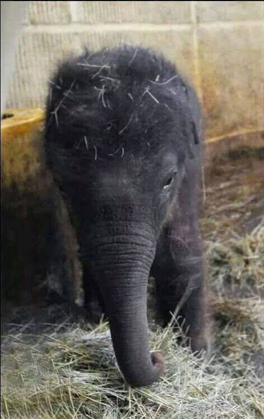 Pin By Kami Turner On Elephants Animals Cute Baby Animals Baby Animals