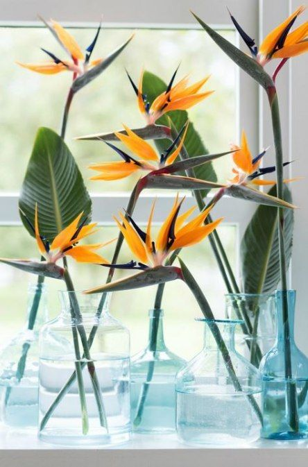 35+ Trendy Bird Of Paradise Flower Arrangement Vase #bird