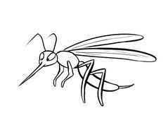 Dibujo de un mosquito, imágenes de insectos para colorear:
