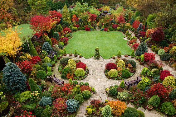 Autumn garden beautiful acers. Picture was taken on 29th October   when most of the Japanese maples in the upper garden were at their peak of autumn colour change. They  use this foliage as their autumn flowers.: