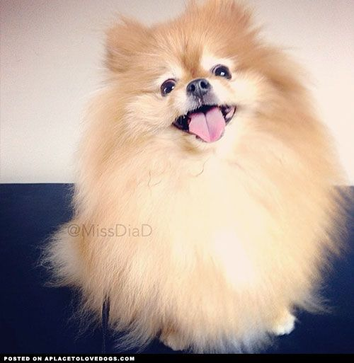 Sweet Fluffy: Sweet, Funny And Happy On Pinterest