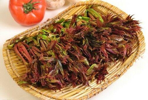 40 Toon Seeds Chinese Toon Toona Sinensis Roem Organic Vegetables C005