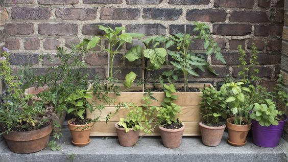 """At the core of our arrangement is a beautiful wooden box planted with two key plants: we used the """"Super Sweet 100"""" cherry tomato and Japanese eggplant."""