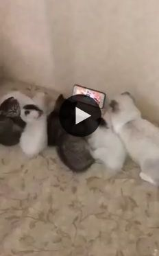 O dono descobriu um método de como distrair os gatos