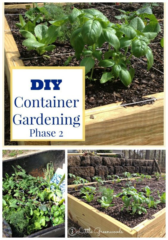 Diy container garden planning and planting pinterest for Summer vegetable garden