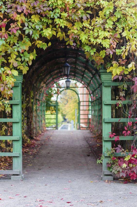 Dieser Bogen im freien ist im schönen roten und grünen Reben bedeckt. Durch die Verwendung von Einzelbogen Holzkonstruktionen und Reben können Sie Tunnel und überdachte Wege mit schönen Pflanzen erstellen. Dadurch wird deutliche Zeichen und Interesse an diesen Tunneln.
