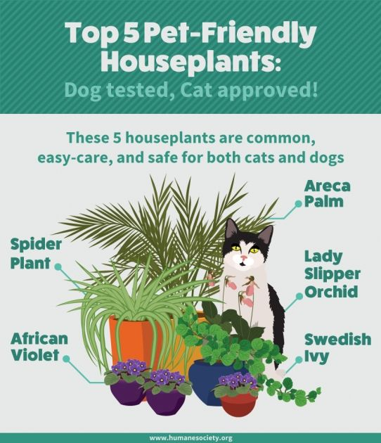 Safe Flowers For The Garden With Cat Plants Pet Friendly Safe House Plants Cat Safe Plants