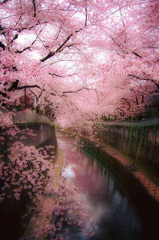 Delicate beauty!!