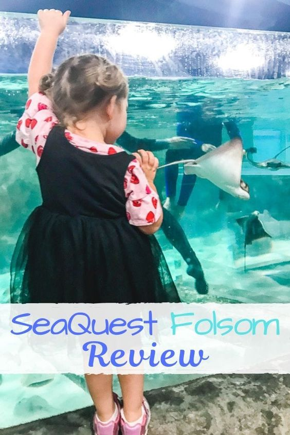 Seaquest Folsom Review Fun Places For Kids Fun Places To Go Folsom