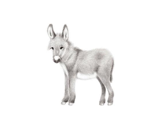 Bébé Donkey pépinière Art, gris et blanc pépinière, bébé Animal Print, crayon dessin, animaux de basse-cour, pépinière Art, âne Art Print