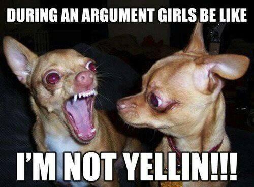 Funny chihuahua meme! Girls be like.. | ANIMALS ...