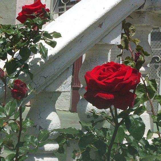 la vie en rose: