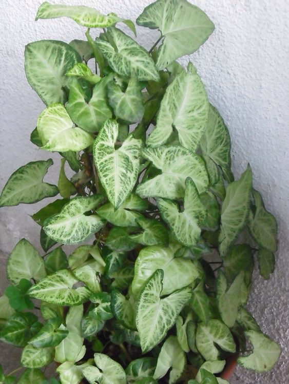 Planta de interior plantas de interior pinterest - Plantas grandes de interior ...