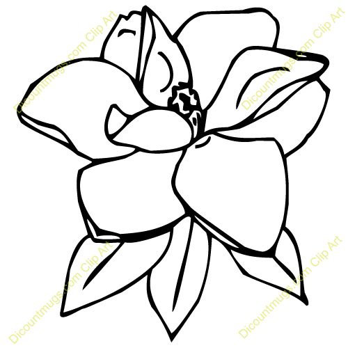 Magnolia Flower Line Drawing : White magnolia flower drawings imgkid the