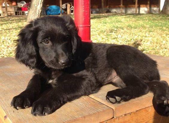Craigslist Pets For Sale Minneapolis