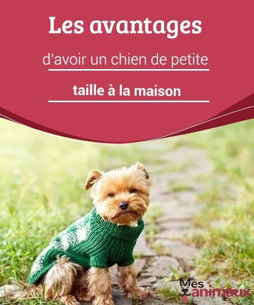 My Animals Blog Sur Les Conseils Les Soins Et Tout Ce Qui Concerne Le Monde Animal Chien Petite Taille Chien Chien Grande Taille