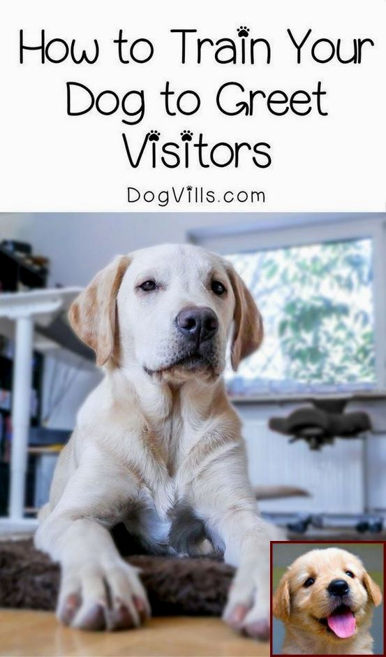How To Train A Service Dog At Home Tip 122981603 Dog Training Training Your Dog Easiest Dogs To Train