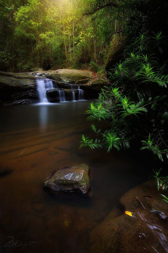 Summer in the Forest by Midnight Photography