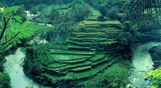 Bali: Beautiful Bali, Favorite Places Spaces, Places I D, Beautiful Place, Amazing Places, Ubud Bali, Bali Indonesia