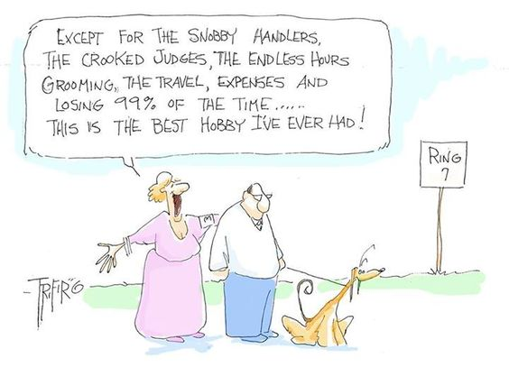 The Joys of Dog Showing as Seen by an Owner/ Handler: