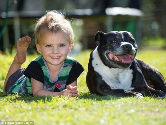 Hero Dog Saves 2-Year Old From Drowning In A Dam
