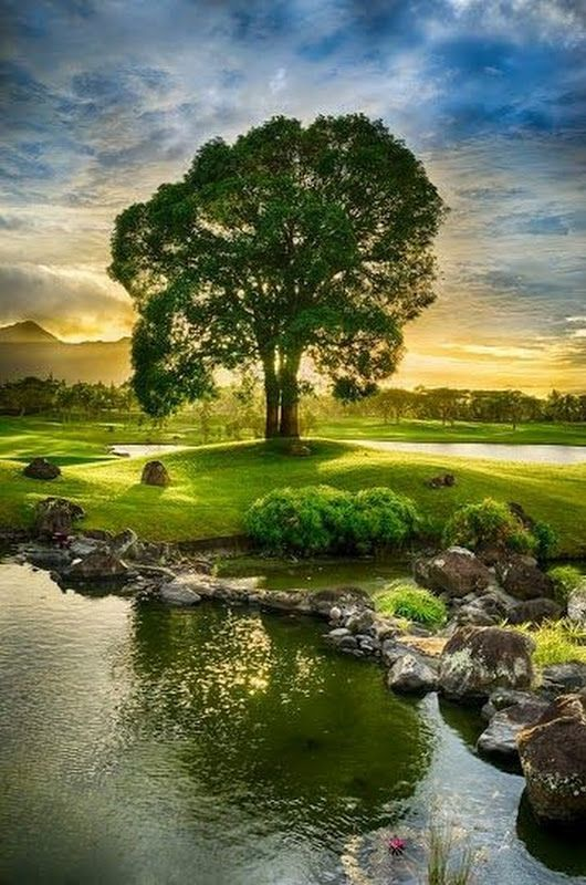 Lie Under The Tree Beneath The Open Sky By The Calm Water Enjoy The Beauty Of Nature Beautiful Landscapes Nature Pictures Beautiful Nature