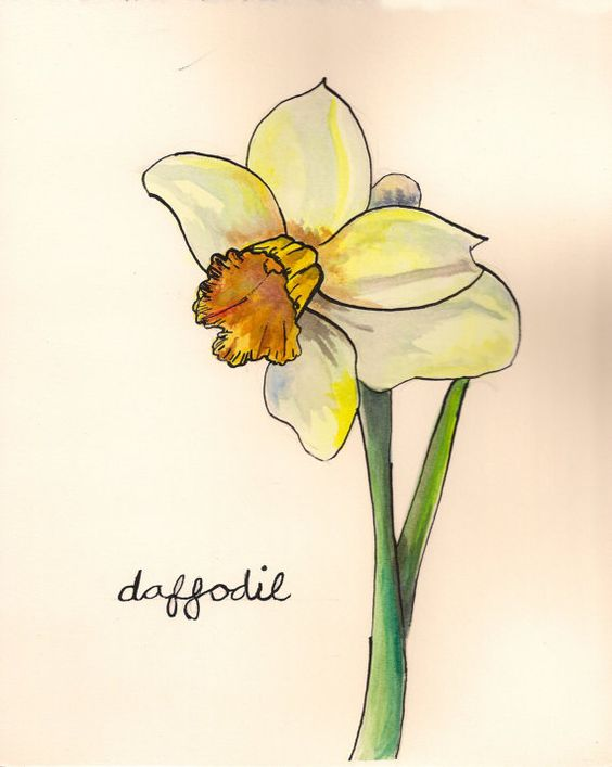 Yellow Daffodil Watercolor Print | Births, Flower and ...