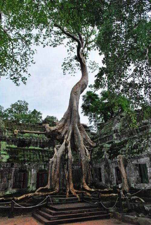 Templo *_*Ta Prohm  Siem Reap Cambodia